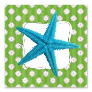 Καλοκαιρινός Γαλάζιος Αστερίας